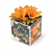 Nature's Gift Box