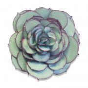 Sizzix Bigz Die - Succulent