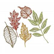 Sizzix Thinlits Die Set 5PK - Skeleton Leaves by Tim Holtz